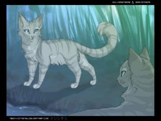 Коты воители сияющая звезда