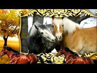 «ЛОШАДИ» под музыку Берковский - Глория (песня про лошадей). Picrolla