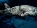 Моя Ева хочет спать)))