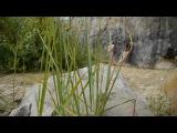 WorkShop Арт-Ню на природе 28 июня 2012