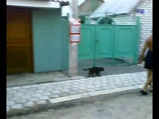 По улицам кота водили ..))) Урзуф 07 -12