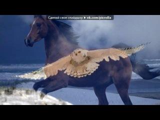 «Эти удивительные животные» под музыку Поль Мариа - В мире животных. Picrolla