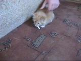 Котененок и сигарета