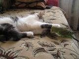 Мои питомцы - кошка Дуня и попугай Гриша