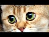 «С моей стены» под музыку очень грусная песня про кота - Не обижайте кошек и котов.... Picrolla