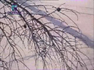 Соболь отгоняет лиса от задавленной кабарги
