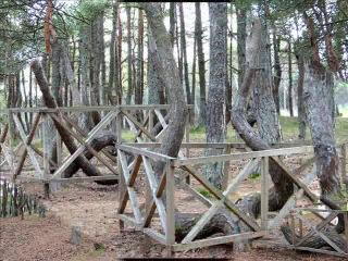 Танцующий лес (музыкальное слайд-шоу) ч 2