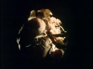 5 of 12 - / BBC: Живая планета. Море трав / The Living Planet / 1984