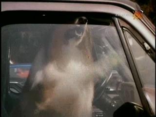 Новые приключения Лесси / The New Lassie 4 серия