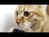 Кот и пылесос Очень смешно ))))) XD