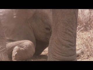 BBC David Attenborough Africa \ ВВС Дэвид Аттенборо Африка Саванна \ Savannah