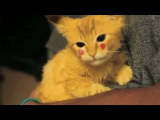 Котенок Пикачу покимон