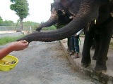 слоняра
