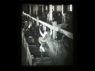 Фильм 1941 года про Ирскую коммуну, Ленинское, Мельничный