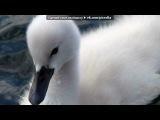 «лебеди» под музыку араш - просто красивая музыка.... Picrolla