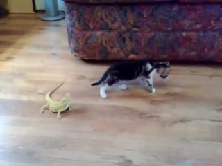 котенок и игуаны ))