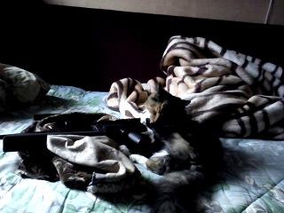 Кошка лижет винтовку