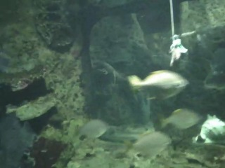 океанариум в Сочи парк Ривьера