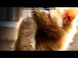 «Со стены друга» под музыку Елвін і бурундуки ))) оо-о-о-о-оооо-о ))) - ))). Picrolla
