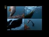 Планета хищников - Большая белая акула