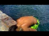 П.г.т.Гурзуф) пижки в воду с 5и4яла)