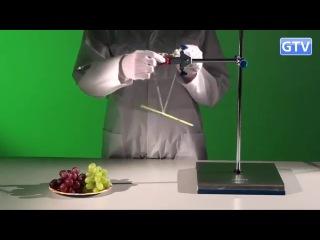 Магнит и виноград - опыты с магнитным полем