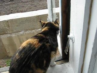 Это соседская кошка, тоже залезла ко мне на подоконникОчень ласковая