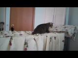 мой кот дурак)