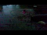 альбинос сиганула в болото*