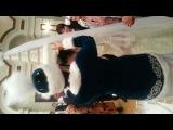 свадьба Айжан и Арман