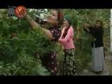 kerim gurbanalyyew - summaryn nary