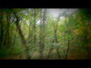 как-то мы пошли в лес