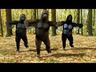 Dancing Gorillas , monkey dance , break bit , обезьяны танцуют, брейк бит