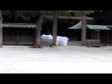 shinto shrine, monks, Tokyo, Токио, Япония, Japan