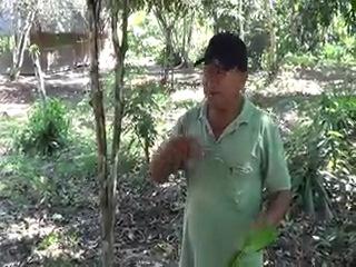 Лекция Дона Альберто о некоторых лекарственных растениях, произрастающих на территории лагеря.
