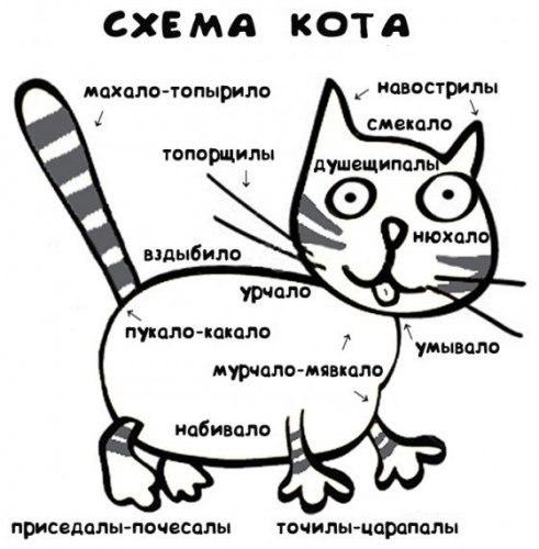 http://cs5148.userapi.com/u165134271/-14/x_6c3a80a4.jpg