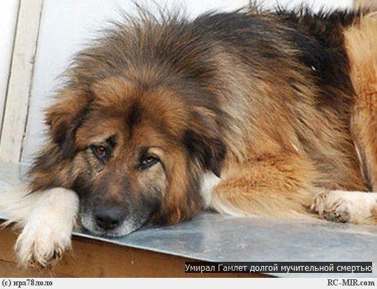 Был очень осторожен в отношении к людям, даже к собакам, никогда...