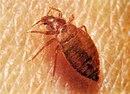 Клопы, клещи, крысы, мыши мухи, пауки, жуки, комары, муравьи, осы, моль