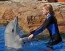 Окружив косяк рыбы подальше в море, дельфины не бросаются, каждый по...