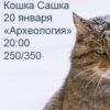 Кошка Сашка 20.01.2012 в Археологии