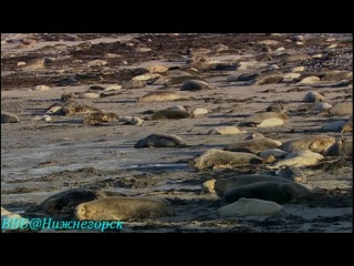 BBC «Рассказы о животных» (01 серия) (Документальный, 2008)