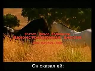 & Притча о Звёздной Любви - Земная Лошадь и Звёздный Конь