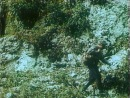 Тропой бескорыстной любви художественный фильм режиссёра Агаси Бабаяна Первый фильм тетралогии о ручной рыси по кличке Куна