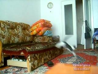 Кот и кролик  http://avivas.ru