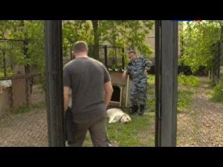 Собачья работа 1 серия из 8 2012 SATRip