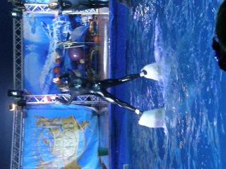 Дельфинарий Кобзов. Поездка на белых китах