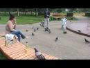Игорь,повелитель голубей !