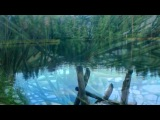 Осенью в лесу» под музыку Анатолий  Полотно - Карелия.