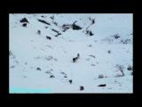 BBC «Жизнь млекопитающих (05) - Плотоядные» (Документальный, 2002)