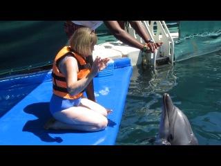 Мое общение с дельфином (1)
